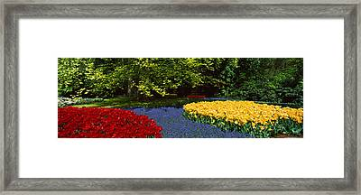 Flowers In A Garden, Keukenhof Gardens Framed Print by Panoramic Images