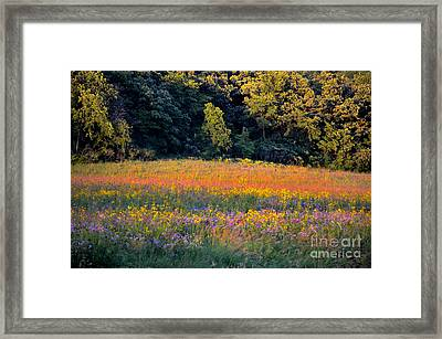Flowers In The Meadow Framed Print by Deb Halloran