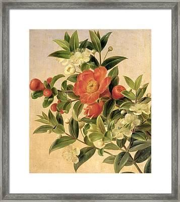 Flowers Framed Print by Johan Laurents Jensen