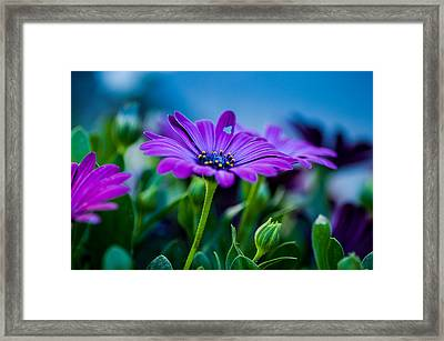 Flowers Framed Print by Mirra Photography