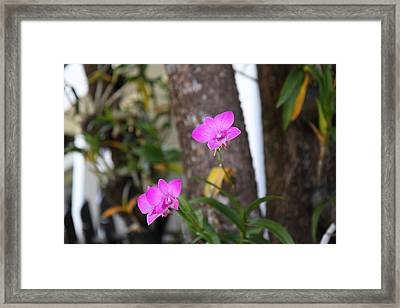 Flowers - Panviman Chiang Mai Spa And Resort - Chiang Mai Thailand - 01131 Framed Print by DC Photographer
