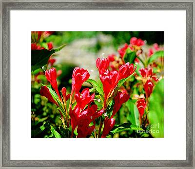 Flowers -  Red Beauties - Luther Fine Art Framed Print by Luther Fine Art