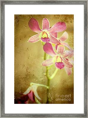Flowers Framed Print by Sophie Vigneault