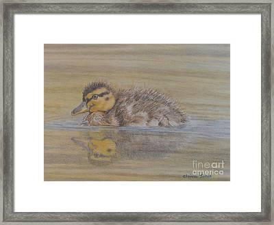 Fluffy Duckling Framed Print by Elaine Jones