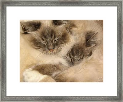 Fluffy Duo Framed Print by Gun Legler