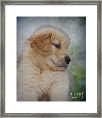 Fluffy Golden Puppy Framed Print by Susan Candelario