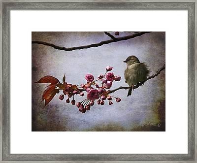 Fluffy Sparrow  Framed Print by Barbara Orenya