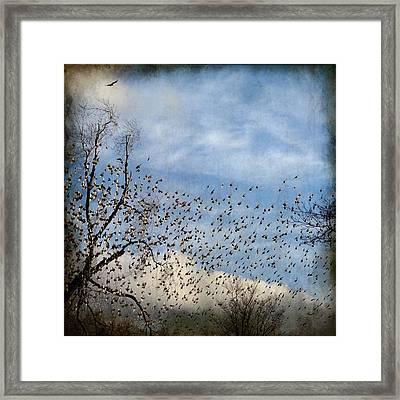 Flutter Framed Print by Gothicolors Donna