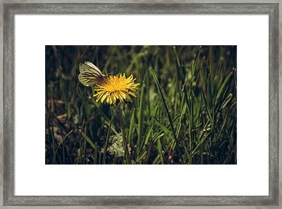 Fluttered By Framed Print by Chris Fletcher