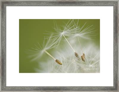Fly Away Framed Print by Anne Gilbert