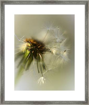 Fly Away Framed Print by Camille Lopez