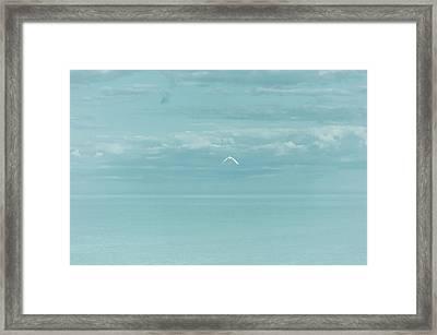 Fly Away Framed Print by Kim Hojnacki