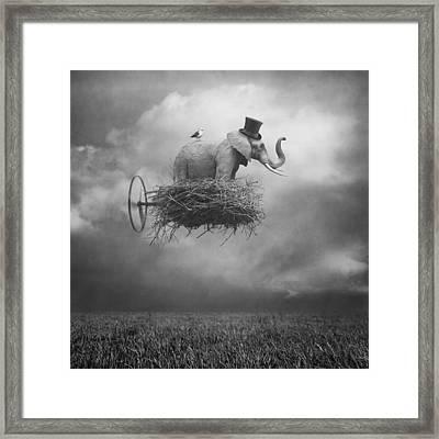 Fly Framed Print by Beata Bieniak