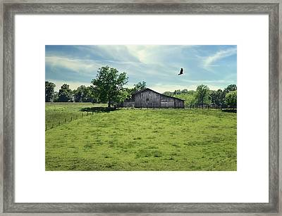 Fly By Framed Print by Steven  Michael