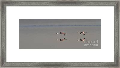 Fly Fly Away My Pretty Flamingo Framed Print by Heiko Koehrer-Wagner