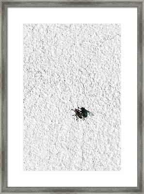 Fly On A Wall Framed Print by Alexander Senin