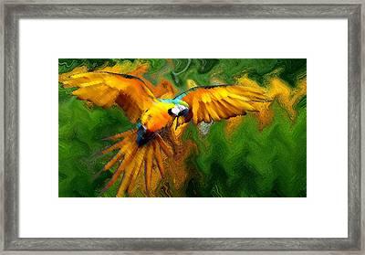 Flying 2 Framed Print by Bruce Iorio