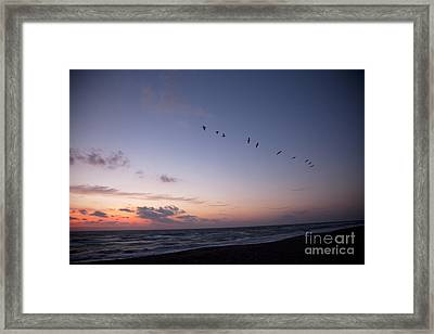 Flying Framed Print by Amanda Barcon