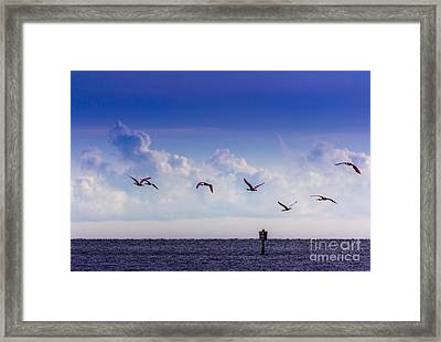 Flying Free Framed Print by Marvin Spates