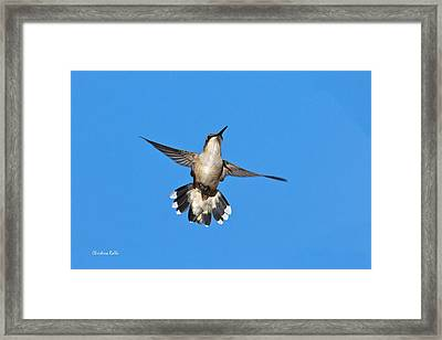 Flying Hummingbird Against Blue Sky Framed Print by Christina Rollo