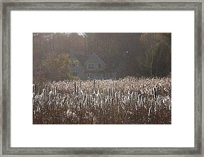 Flying Insects In Sunlight Framed Print by Peter Menzel