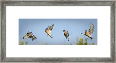 Flying Framed Print by Jean Noren