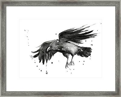Flying Raven Watercolor Framed Print by Olga Shvartsur