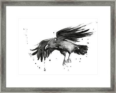 Flying Raven Watercolor Framed Print by Olga Shvartsur