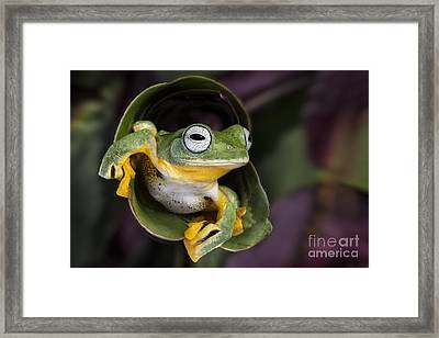 Flying Tree Frog Framed Print by Linda D Lester