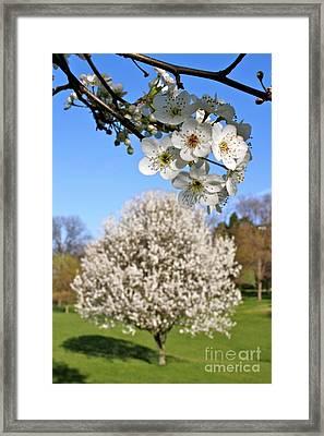 Focus On Spring Framed Print by Jay Nodianos