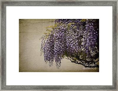 Focus On Wisteria Framed Print by Terry Rowe