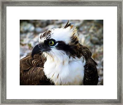 Focused Framed Print by Karen Wiles