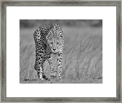 Camouflage Framed Print featuring the photograph Focused Predator by Jaco Marx