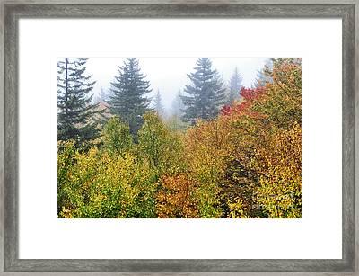 Fog Fall Day Framed Print by Thomas R Fletcher
