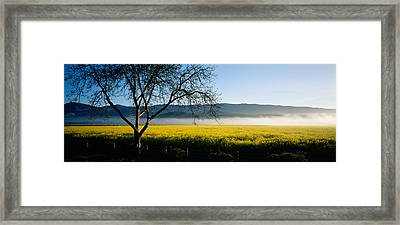 Fog Over Crops In A Field, Napa Valley Framed Print by Panoramic Images