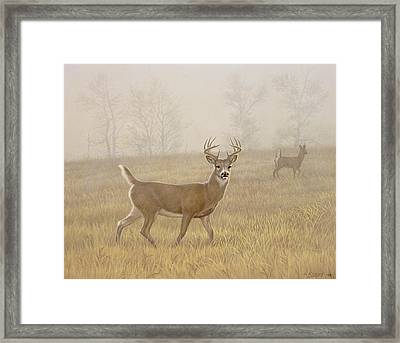 Foggy Morning-whitetail Framed Print by Paul Krapf