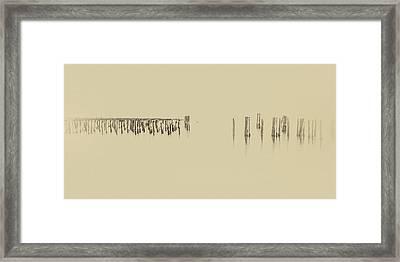 Foggy Framed Print by Thomas Hall Photography