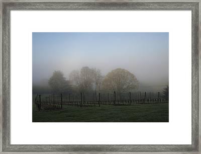 Foggy Vineyard Morning Framed Print by Jean Noren