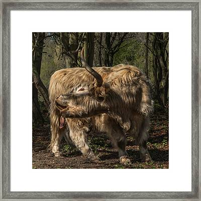Folded Framed Print by Chris Fletcher