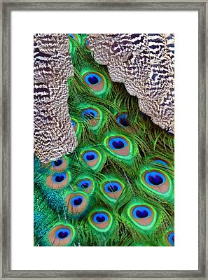 Folded Wings Framed Print by Angelina Vick