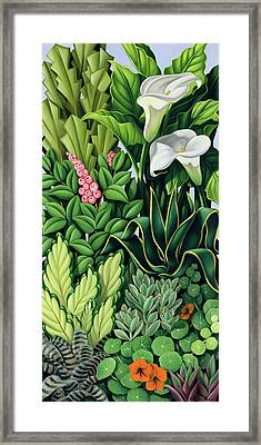 Foliage Framed Print by Catherine Abel