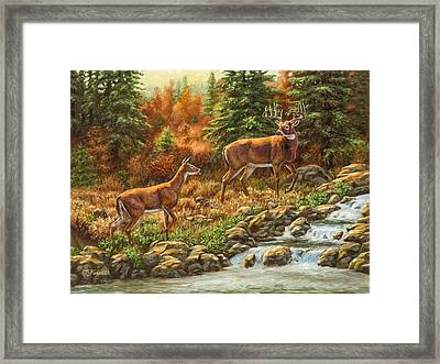 Whitetail Deer - Follow Me Framed Print by Crista Forest