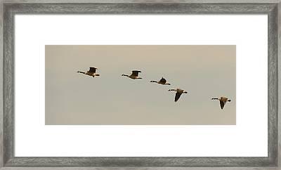 Follow Me Framed Print by Robert Mitchell