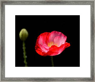 Follow My Lead Framed Print by Camille Lopez