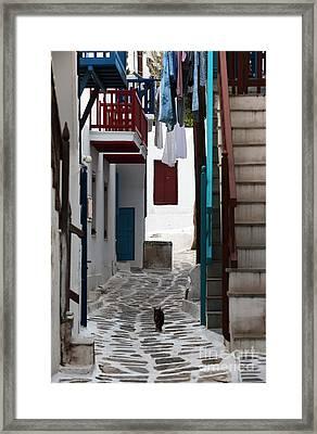 Follow The Cat In Mykonos Framed Print by John Rizzuto