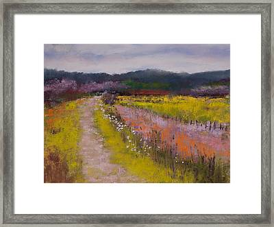 Follow The Daisies Framed Print by David Patterson