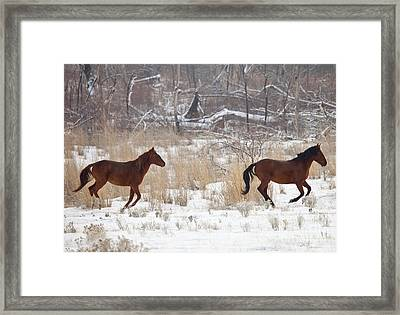 Follow The Leader Framed Print by Mike  Dawson