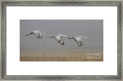 Follow The Leader Framed Print by Ruth Jolly