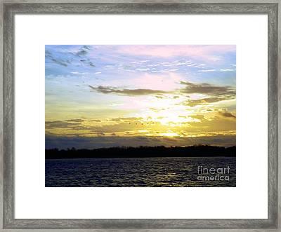Follow The Sun Framed Print by Robyn King