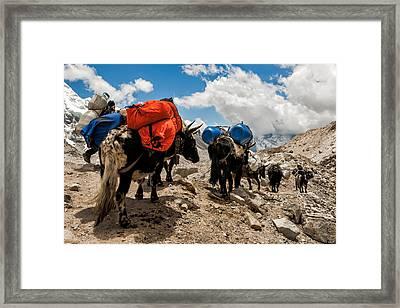 Follow The Yaks Framed Print by Kristin Lau